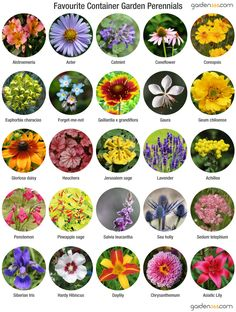 Growing Perennials In Containers blooming Perennials maintenance Perennials full sun ideas Flower Garden Plans, Cut Flower Garden, Diy Garden, Container Flowers, Container Plants, Container Gardening, Vegetable Gardening, Flowers Perennials, Planting Flowers
