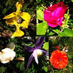 Kukkakimara