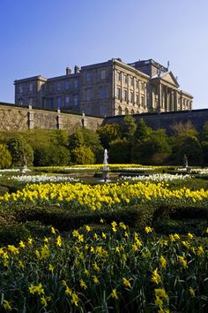 Looking over the early eighteenth century Dutch Garden in spring with daffodils in bloom towards the house at Lyme Park, Cheshire, England