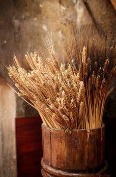 wheat and barley in wooden bucket-- http://kentucky55.wordpress.com/
