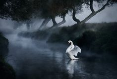 Angel by Alex Saberi