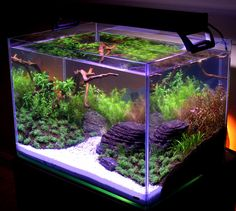Cute and Unique Tank Aquarium Design for Beautify in the RoomYou are in the right place about Fishes reference Here we offer you the most beautiful pictures about the Fishes crafts you are looking for. When you examine the Cute and Unique T Aquascaping, Aquarium Aquascape, Betta Aquarium, Planted Aquarium, Saltwater Aquarium, Freshwater Aquarium, Betta Fish, Betta Tank, Vivarium