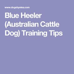 Blue Heeler (Australian Cattle Dog) Training Tips