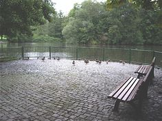 """""""Memories of a long ago childhood, when the world was still at peace,"""" says Renate of these photos of Plauen's Stadt Park.  The park's pond is one of Renate's favorite places, where she used to feed the ducks and swans as a child. Today there are no swans, but the pond still exists."""