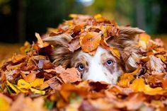 20 Photos of Animals Enjoying the Magic of Autumn