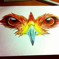 cool hawk drawing - Google Search