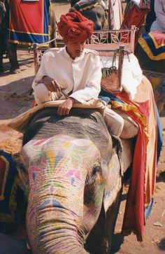 """Elephant """"driver"""" to Amber Fort, Jaipur, India"""