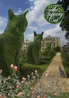 Revisiting Audley End with the avenue of Topiary Cats Plants For Planters, Cat Plants, Cat Garden, Garden Art, Beautiful Cats, Beautiful Gardens, Cute Cats, Funny Cats, Topiary Garden