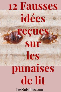on a beaucoup de fausses idées sur la punaise de lit, son comportement, son répulsif, les remèdes, la prévention... Weight Loss Transformation, Health, Diy, Bed Bugs, Roaches, Beauty Recipe, Health Care, Bricolage, Salud