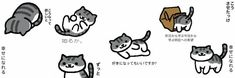 Cute Headers For Twitter, Twitter Header Pictures, Twitter Layouts, Header Twitter, Twitter Banner, Tumblr Banner, Person Icon, Minimalist Icons, Neko Atsume