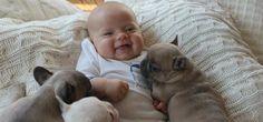 Δείτε μερικές υπέροχες στιγμές ενός μωρού με 3 κουτάβια μπουλντόγκ.