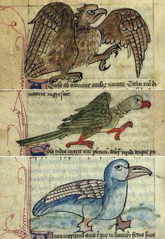 angry birds (aquila/eagle, psitacus/parrot, alcion/kingfisher) Bestiary, England 15th century. København, Kongelige Bibliotek, GkS 1633 4º, fols. 31v, 33v, 36v