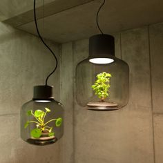 Self-Sustaining Ecosystem Lets You Grow Plants in Windowless Spaces