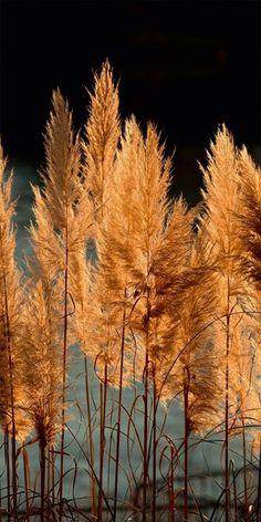 Nature in Focus 2020 - Ackermann Shops, Thalia, Dandelion, Nature, Flowers, Plants, Calendar, Tents, Naturaleza