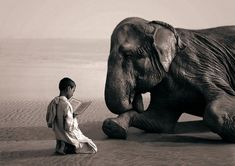 Magical Animal Photography by Gregory Colbert