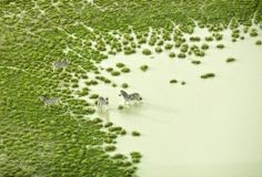 The-urban-journal: Botswana By Zack Seckler.