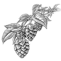 pen and ink food and beverage beer hops