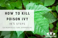 Poison ivy is no fun. If you're wondering how to get rid of poison ivy, this article outlines an eco-friendly, 5-step process for eradicating it. Kill Poison Ivy, Poison Oak, Ivy Tree, Poison Ivy Plants, Ivy Plant Indoor, Gardening Magazines, Tree Care, Garden Quotes, Organic Gardening