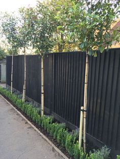 "The post Best Backyard Privacy Fence Landscaping Ideas"" appeared first on Pink Unicorn garden Fence Privacy Fence Landscaping, Privacy Fence Designs, Backyard Privacy, Diy Fence, Backyard Fences, Garden Fencing, Landscaping Ideas, Pallet Fence, Hedge Fence Ideas"