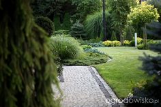 Ogród Dominiki - strona 376 - Forum ogrodnicze - Ogrodowisko