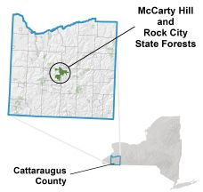 Horseback riding is permitted on logging roads and skid roads Near ellicottville NY McCarty Hill State Forest locator map