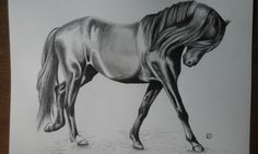 Drawing of horse in grafite