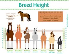 horse breeds sizes compared chart - Google Search