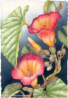 "painting title ""Janine's Hawaiian Bells,"" by watercolor artist Barbara Groenteman Art Floral, Silk Painting, Painting & Drawing, Watercolor Flowers, Watercolor Paintings, Watercolors, Art And Illustration, Botanical Art, Beautiful Paintings"