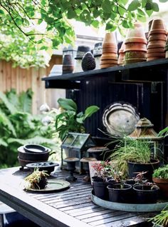 Black shelving with masses of plants