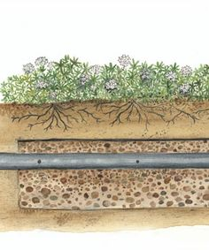 11 Best Septic Mound Landscaping Ideas Images