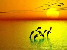 Dolphins - http://universal-wellness.blogspot.com/2015/02/baring-my-soul-and-planting-dream.html