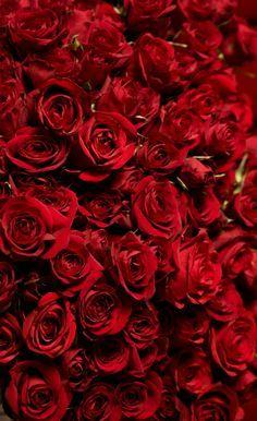 Red Rose Wallpaper Iphone X Rose Wallpaper Rose Wallpaper