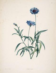 La botanique de J.J. Rousseau : - Biodiversity Heritage Library