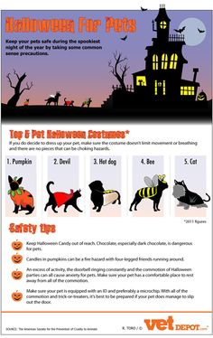 Halloween for pets - Infographic