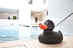 Pure wellness at Skodsborg SPA & Fitness - also for cool quacker ducks...