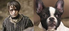 """Arya Stark 
