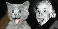 "Einstein kept a tomcat named Tiger who tended to get depressed whenever it rained. One acquaintance recalled him saying to the melancholy cat: ""I know what's wrong, dear fellow, but I don't know how to turn it off.""  Einstein was also quoted as saying, ""A man has to work so hard so that something of his personality stays alive. A tomcat has it so easy, he has only to spray and his presence is there for years on rainy days."""