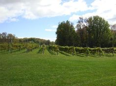 Simon Creek Winery Door County -- girls have spent many an hour running through these vineyards during a Sunday concert