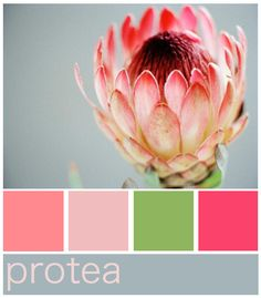 I would like most of my wedding colors pale pink seen here. Protea Art, Protea Flower, Colour Pallete, Colour Schemes, Colour Combinations, Color Palettes, Wedding Color Pallet, Wedding Colors, Protea Wedding