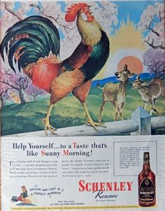 R H  Collins  40 s Full Page Color Illustration  print art  Schenley Whiskey  sunrise rooster