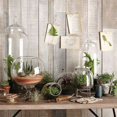I Heart Succulent Terrariums@ Make Them Wonder Blog..I like the one on a metal stand...hmm.