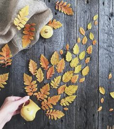 15 Ideas For Autumn Photos That You Will Definitely Want To Repeat Flat Lay Photography, Autumn Photography, Creative Photography, Autumn Flatlay, Fall Inspiration, Autumn Aesthetic, Autumn Scenery, Autumn Cozy, Autumn Painting