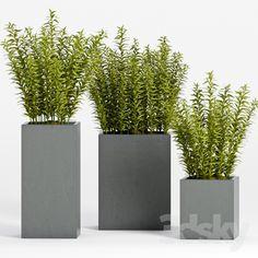 PLANT -15