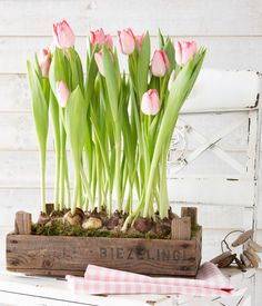 Spring Home Decor With Pink Tulips Pink tulips growing in a simple wooden crate are a great spring or Easter decoration to rock. Pink Tulips, Tulips Flowers, Spring Flowers, Planting Flowers, Tulpen Arrangements, Flower Arrangements, Spring Bulbs, Deco Floral, Spring Home Decor