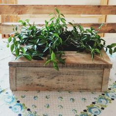 Recycled pallet wood planter. Home decoration. Organic 👍