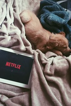 Netflix and a puppy are all I need!