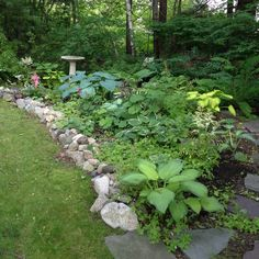 "Woodland Garden... Would love to make wire fence in the back ""disappear"" to elongate yard"