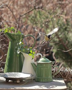 Love Energy, Spring Garden, Watering Can, Dream Garden, Love And Light, Old Houses, Beautiful Gardens, Decoration, Green And Grey