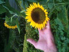 Sensuell massage uppsala sunflower thai-5959