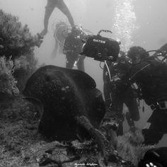 Waiting for hamershead shark! | Galapagos | 2010.10.10  Title: Waiting for hamershead shark! Location: Galapagos Camera: NIKON D300 Lens: undefined Settings: 1/100 f/4 ISO200 Housing: Subal ND300 Strobes: 2 x Subtronic Pro270  http://marek.wylon.com
